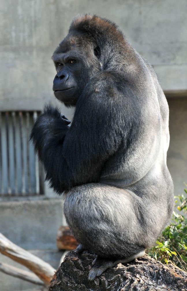Читать про секс женщины и гориллы фото 316-683