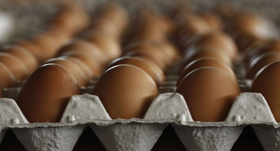 Власти Бельгии знали про зараженные химикатами яйца, которые обнаружили вГермании
