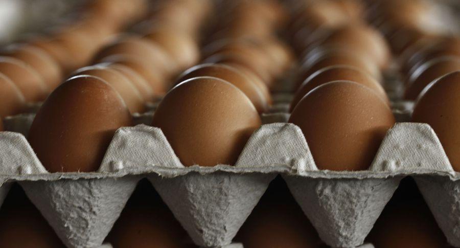 Скандал из-за заражения яиц вЕС: власти Бельгии знали опроблеме