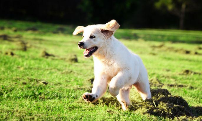 4dbad1af8fa W3 uudised - Vahva video: koer kohtub Disneylandis Plutoga
