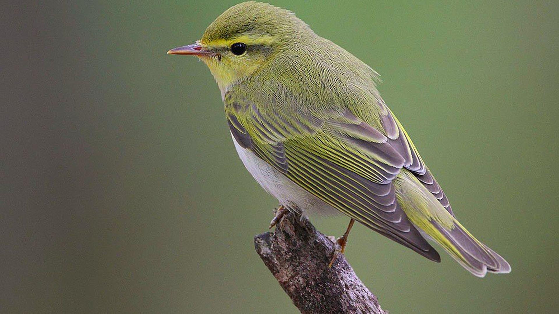 Teadlased näitasid, kuidas linnud üle kõrbe lennatud saavad