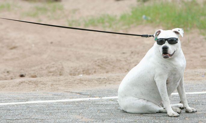 e5a0746d921 Loomaarst vastab: kuidas ülekaalulise koera kaalu langetada? - Loomaarst  vastab - Lemmik