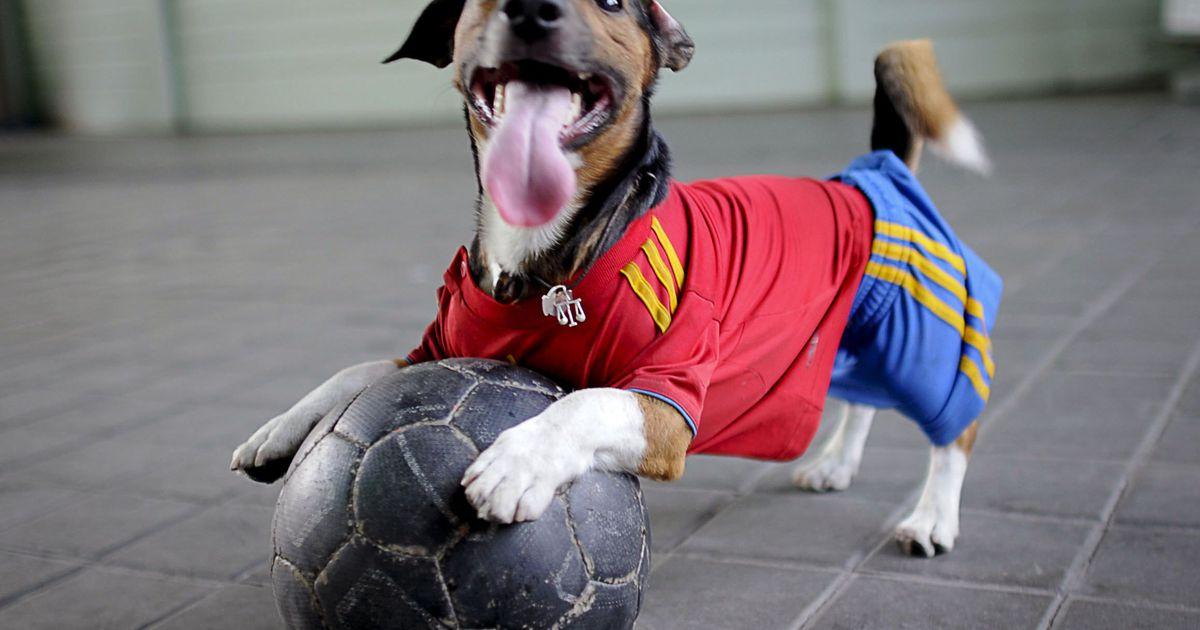 Прикольные картинки животных в спорте