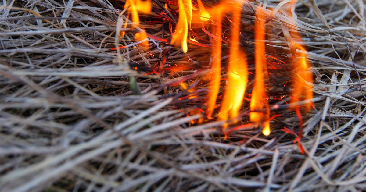 Põlvamaal põles kaks hektarit pilliroogu