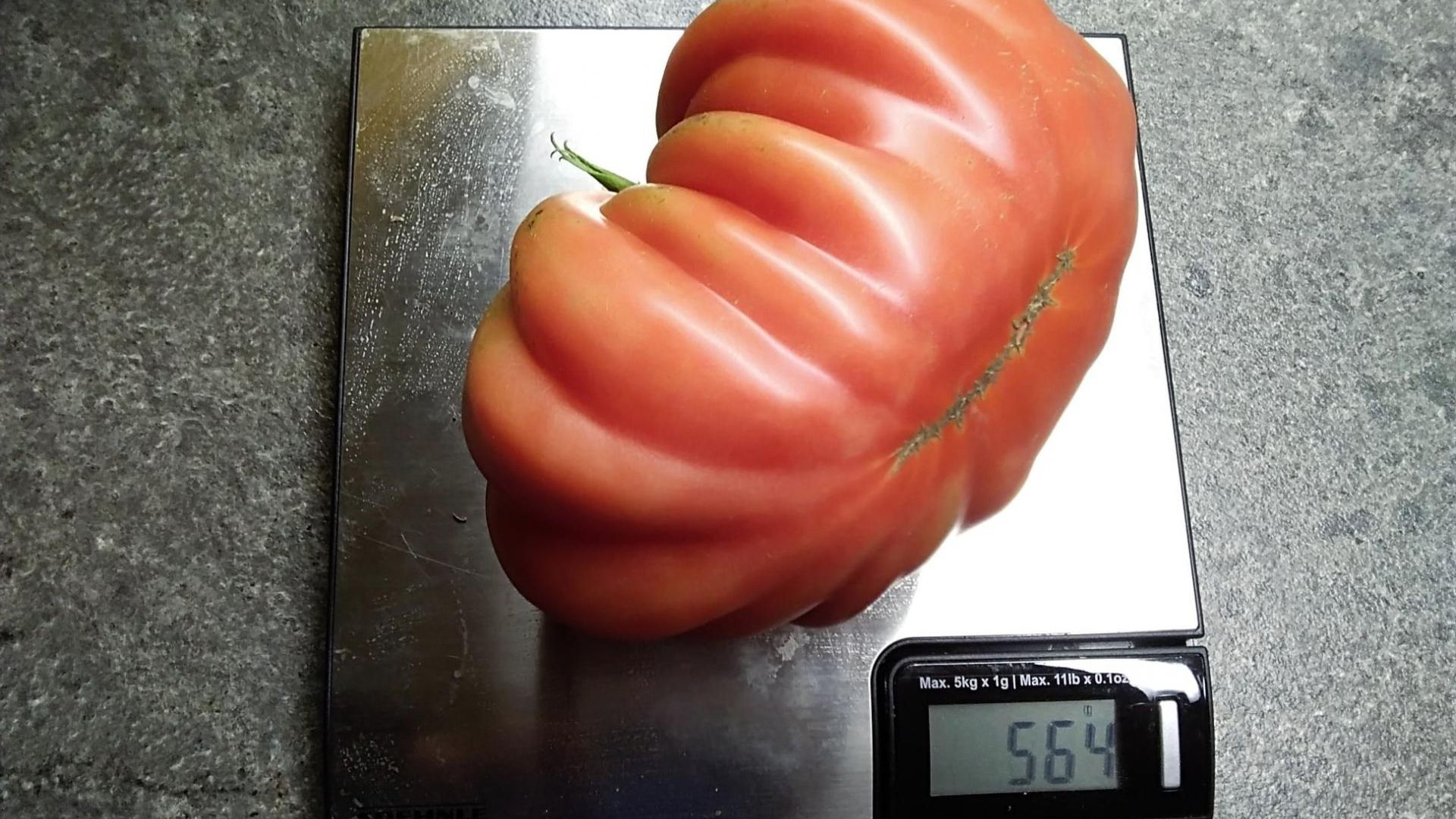Tomatid saavad sügisel, ilma liigse hoolitsuseta, ise hakkama