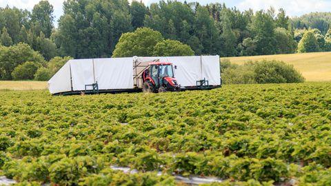 Põllumehed: välistööjõu kaasamise reeglid peaks paika panema võimalikult varakult