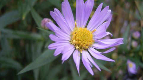 Wikipedia segaduses: pilt ühest lillest saab iga päev 90 miljonit päringut
