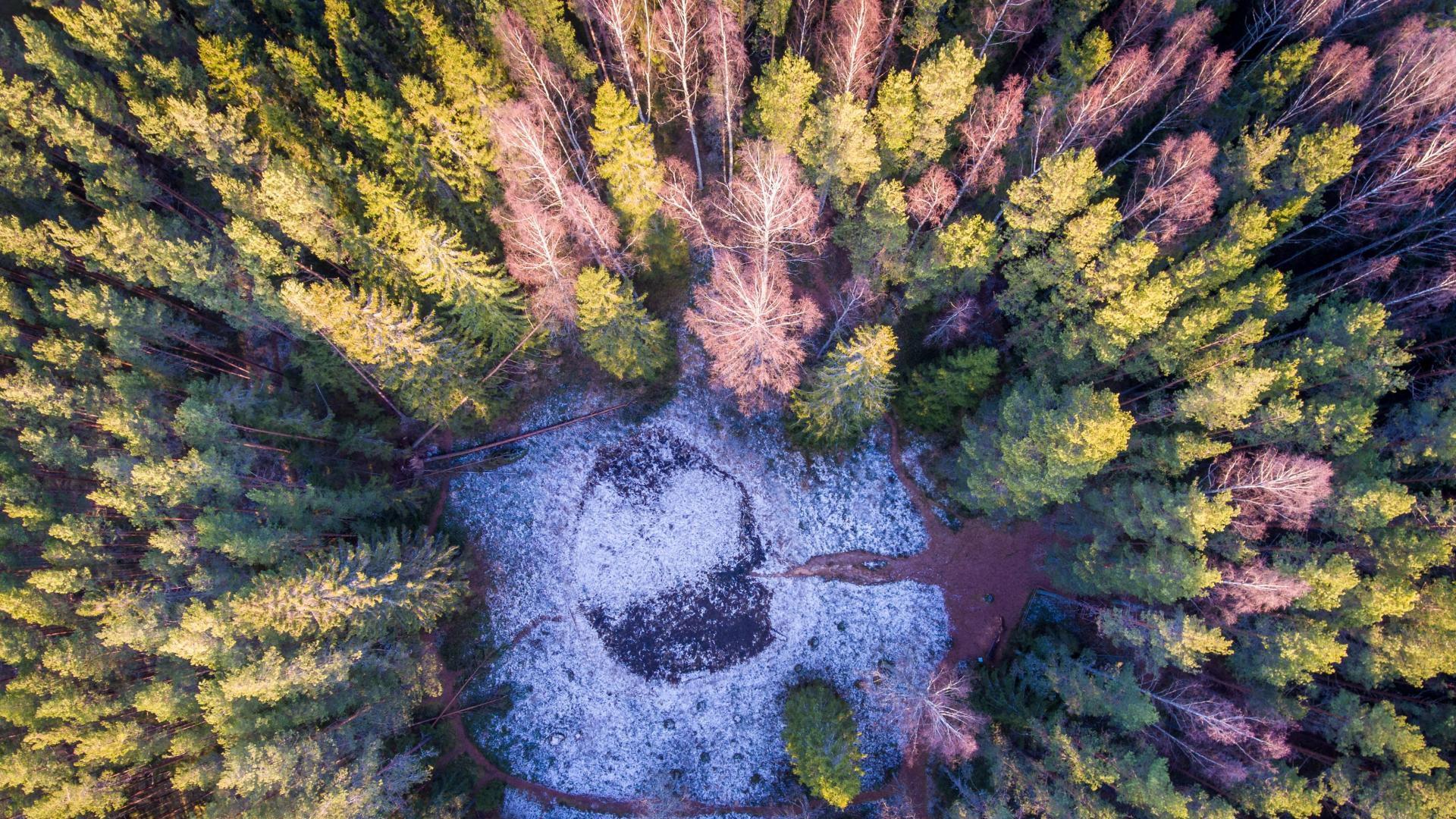 Eesti metsa pindala osutus alternatiivmeetodiga mõõtes suuremaks