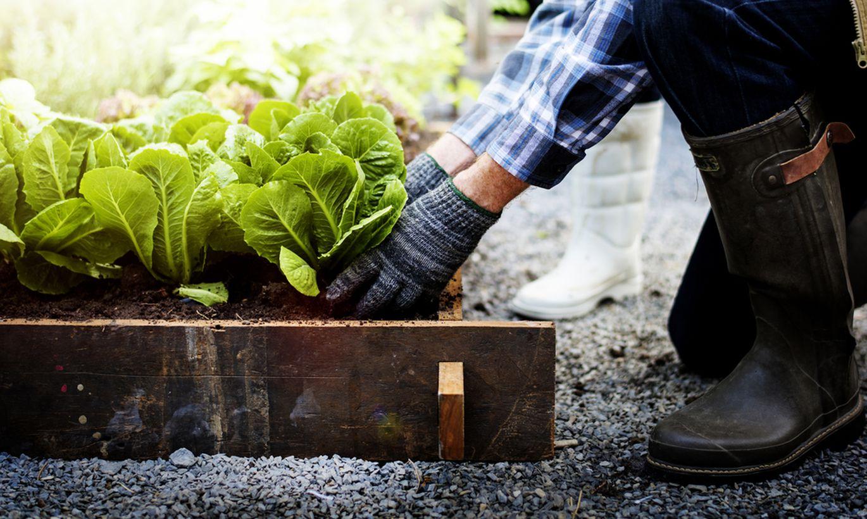 Пять огородных растений, за которые не стоит браться начинающим садоводам