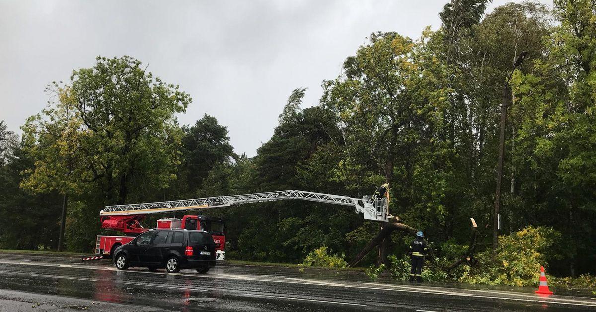 Galerii: tugev tuul murrab teedele puid