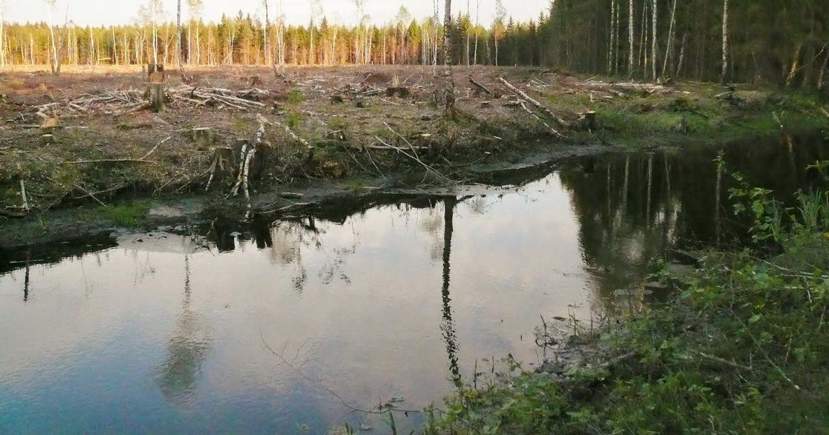 Jäta linnule laulupuu ja kalale kodujõgi